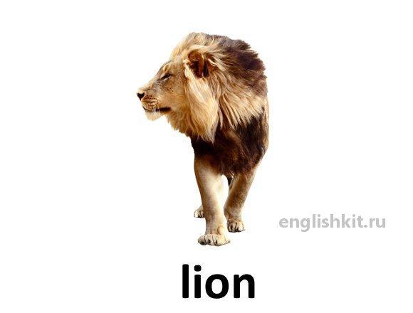 Главная дикие животные wild animals lion