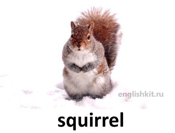 Index дикие животные wild animals squirrel 22 26