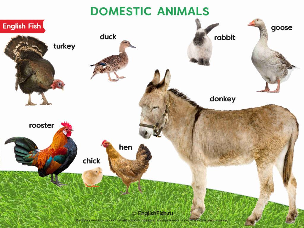 Животные на английском для детей домашние часть 2