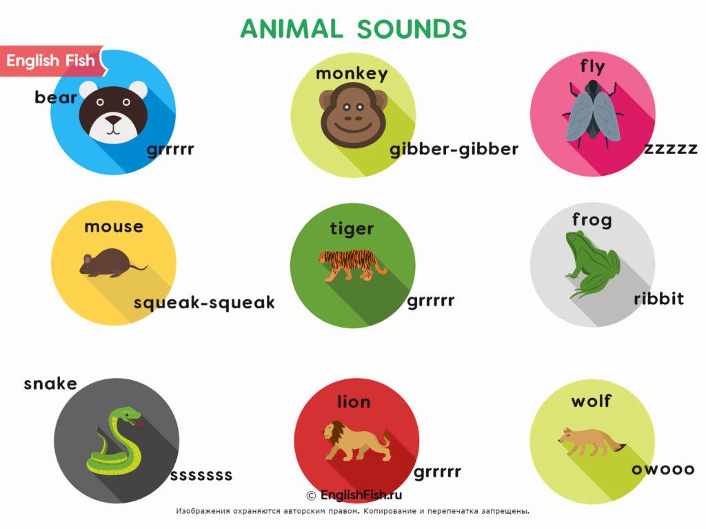 Звуки животных на английском для детей