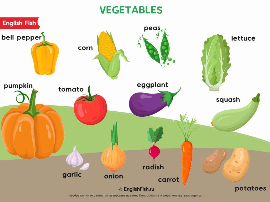 Овощи на английском для детей