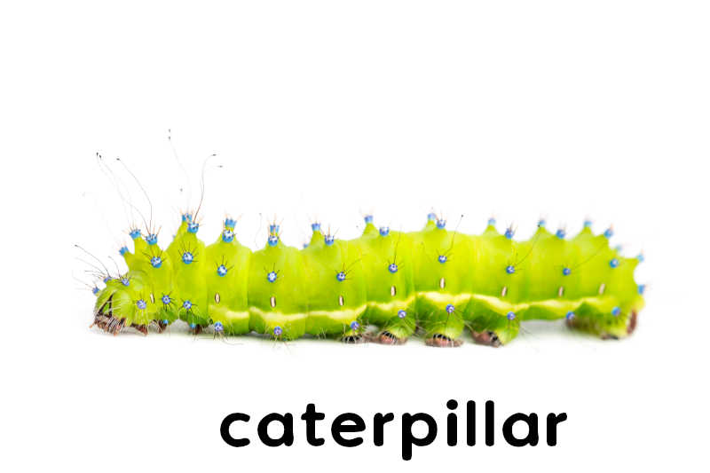 If coloured caterpillars could change their colours constantly